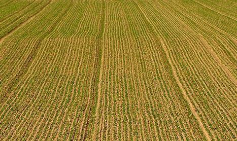 Le changement indirect d'affectation des sols fait débat   Agr'energie   Scoop.it