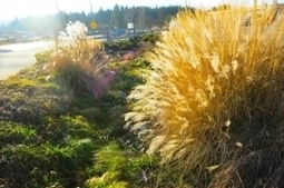 EasyLiving Landscaping | Landscape Construction Service | Nanaimo | Home Improvement | Scoop.it