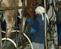 Sinkende Preise auch am Biomilchmarkt erwartet | Agrarforschung | Scoop.it