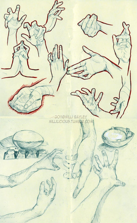 Hands study - Reference Guide | Drawing References and Resources | Scoop.it