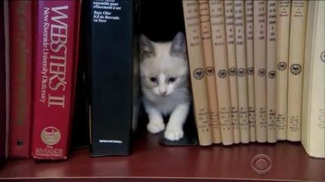 Une bibliothèque à chats au Nouveau Mexique | BiblioLivre | Scoop.it