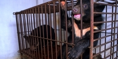 Why are bears killing themselves to escape this torture? | Nature Animals humankind | Scoop.it