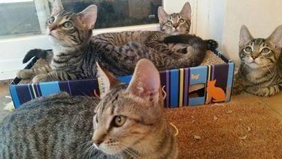 Gats de Gràcia | Tenim cura dels gats del carrer | Plaça Lesseps | Scoop.it