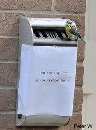 Déplacer un nid occupé (contenant des oeufs ou des oisillons)  | Biodiversité | Scoop.it