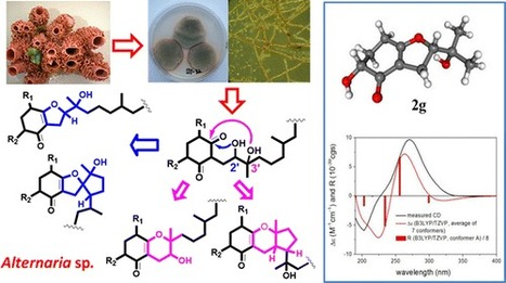 Meroterpenoids with Diverse Ring Systems from the Sponge-Associated Fungus Alternaria sp. JJY-32 | Chemistry | Scoop.it