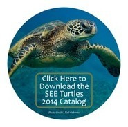 Ocean Pollution | Sea Turtle Threat Articles | Scoop.it