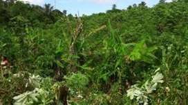 Rainforest regrowth boosts carbon capture, study shows - BBC News | iGCSE | Scoop.it