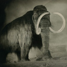 Bringing Extinct Species Back to Life - Pictures, More From National Geographic Magazine   Trends in Sustainability   Scoop.it