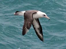 Biodiversité: un tiers des oiseaux américains en danger - Journal de l'environnement | Biodiversité | Scoop.it