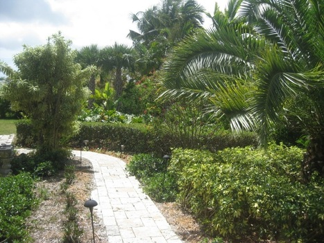 Tree Trimming Services At Miami   Landscapings   Scoop.it