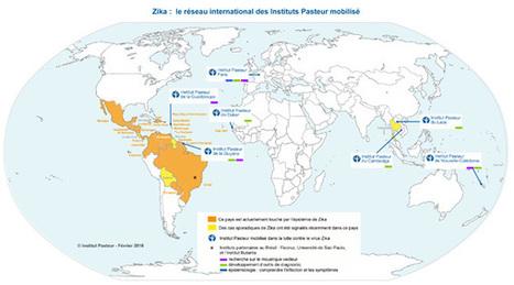 Zika. Le réseau international des instituts Pasteur mobilisé   Epidémiologie   Scoop.it
