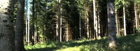 Climat : les forêts françaises suffoquent | (Culture)s (Urbaine)s | Scoop.it