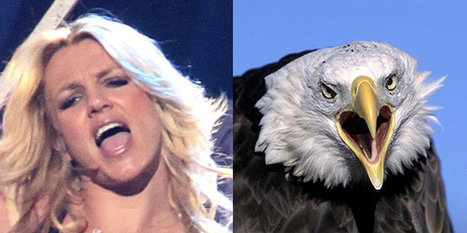 If Pop Stars Were Birds, These Are The Birds They'd Be | No soy un mainstream | Scoop.it