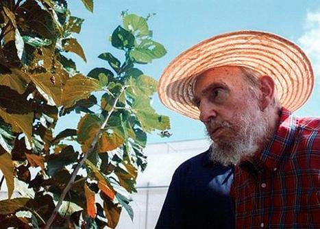 La hierba que mantiene vivo a Fidel Castro | Un poco del mundo para Colombia | Scoop.it