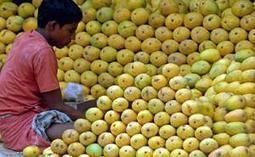 Inde - L'interdiction européenne a fait chuter les prix | Aimé | Scoop.it