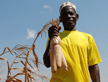 DFID wins award for maize project | Agricultural Biodiversity | Scoop.it