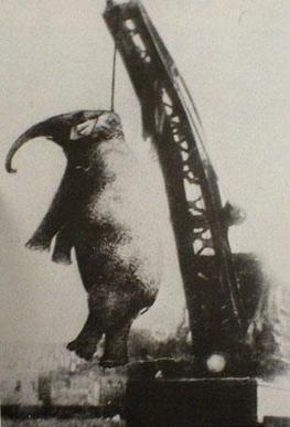 Twitter / AncientPics: The hanging of Mary the Elephant, ... | Practics | Scoop.it