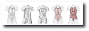 Recortable de torso humano de Horst Kiechle | Biología. Biology. Education. TIC | Scoop.it