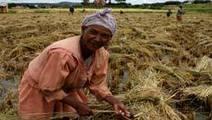 Madagascar : L'agriculture comme salut de l'économie du pays? | Akory! | Scoop.it