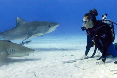 Why You Should Dive with Sharks! : Living Green Magazine | All about water, the oceans, environmental issues | Scoop.it