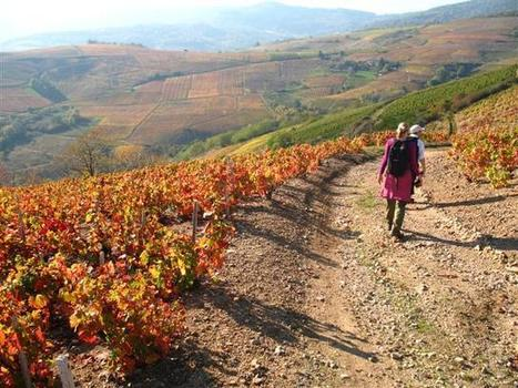 Beautiful Beaujolais Trail - Self Guided Walking Holiday in France | Beaujolais | Scoop.it