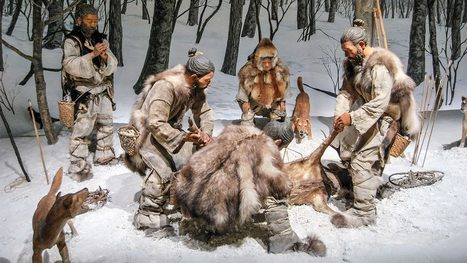 Prehistoric Japanese graves provide best evidence yet that dogs were our ancient hunting companions   Japanese Science & Technology News   Scoop.it