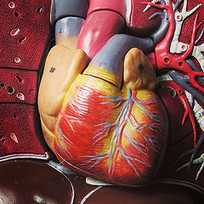 3D Printer for Human Organs. | 3D Printing and Fabbing | Scoop.it