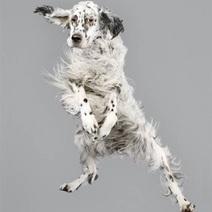 Vous pensez que les chiens ne savent pas voler ? Ces photos vous feront changer d'avis ! | CaniCatNews-actualité | Scoop.it