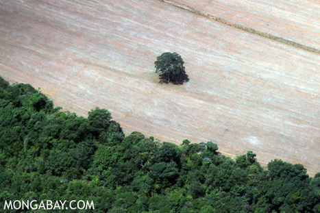 Deforestation climbing - along with fears - in the Amazon | Rainforest EXPLORER:  News & Notes | Scoop.it