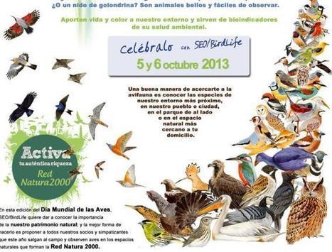 Día Mundial de las Aves: dime cómo cantas y te diré qué pájaro eres - La Razón | Casa NIDO - HOUSE NEST | Scoop.it