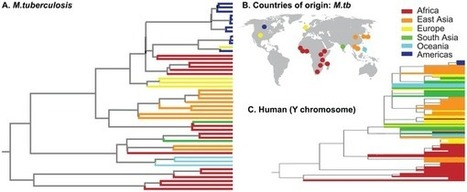 Tuberculosis Genomes Show Why It's A Wildly Successful Pathogen | Anthropology | Scoop.it