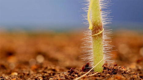 Through the Wormhole: Cuscuta Parasite : Video : Science Channel | Erba Volant - Applied Plant Science | Scoop.it
