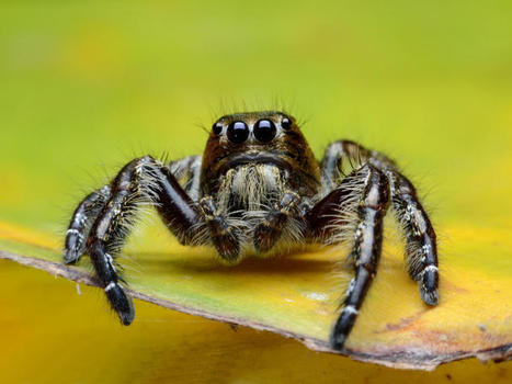 Biologists Watch Spiders Interact with Virtual Reality Using 3D Printed Treadmills   cool stuff from research   Scoop.it
