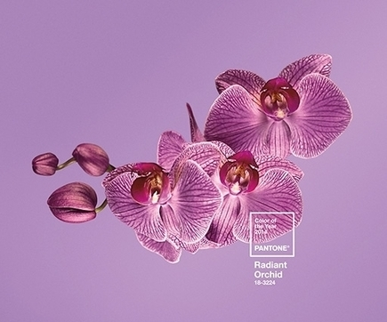 Pantone's Colour of the Year 2014 is a rosy pink | Design + Epublishing + Ebook + Graphisme | Scoop.it