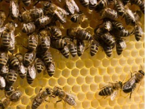 How to make a difference - Food and gardening - How to be an urban beekeeper - The Ecologist   Simple, sustainable living.   Scoop.it