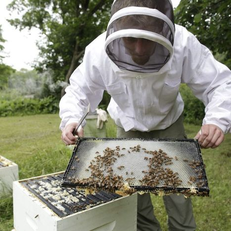 With honeybees in short supply, beekeepers worry about the plight of the ... - Buffalo News | Native wildflowers | Scoop.it