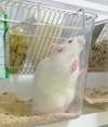 Best way to kill lab animals sought   National Centre for the 3Rs in the news   Scoop.it