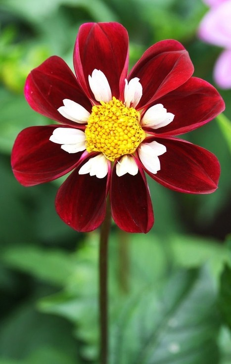 50 Amazing Flower Photographs   Inspirational Photography to DHP   Scoop.it