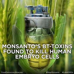 Recent studies find Monsanto's Bt corn toxic to humans | Monsanto vs Mother Earth | Scoop.it