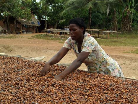 "Fairtrade boom drives green standards adoption | Corporate ""Social"" Responsibility – #CSR #Sustainability #SocioEconomic #Community #Brands #Environment | Scoop.it"