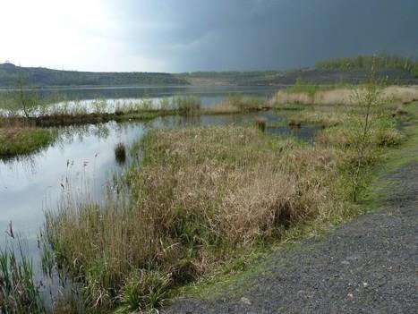 La biodiversité des terrils miniers du Nord de la France | Les colocs du jardin | Scoop.it