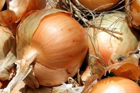 Bien-être : Les bienfaits de l'oignon pour votre santé | AOP | Scoop.it