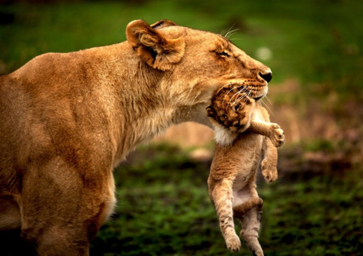 Beautiful and Stunning Wildlife Pictures | Smartnetzone | Machinimania | Scoop.it