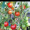 Growing Vegetables in Containers | Edible Garden | Scoop.it