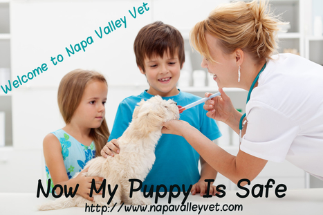 Pet Vaccination4 Common Parasites That are Known for Harming Pets | Napa Valley Animal Hospital | Scoop.it
