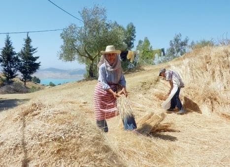 La BERD réaffirme son soutien à l'agro-industrie | Questions de développement ... | Scoop.it