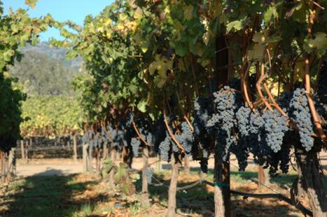 Au moins 63 députés français ont du bon sens | ecce vino | Droit de la vigne et du vin | Scoop.it