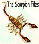 Une nouvelle espèce de scorpion d'Algérie, Buthus pusillus, vient d'être décrite [en anglais] | EntomoNews | Scoop.it