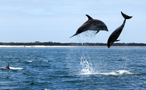 Dolphin display in Northland | Dolphins | Scoop.it