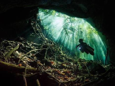 Underwater photography competition winners 2014 - in pictures - The Independent | Cave Diving | Scoop.it